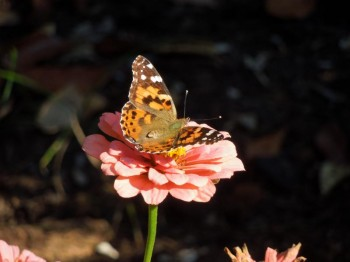 Children's Butterfly Garden